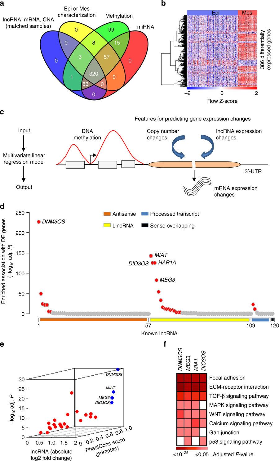 Decoding The Molecular Mechanisms Of Ovarian Cancer Progression Globeathon